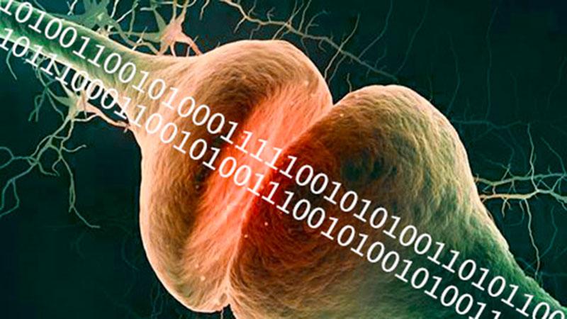 i-sinapsis